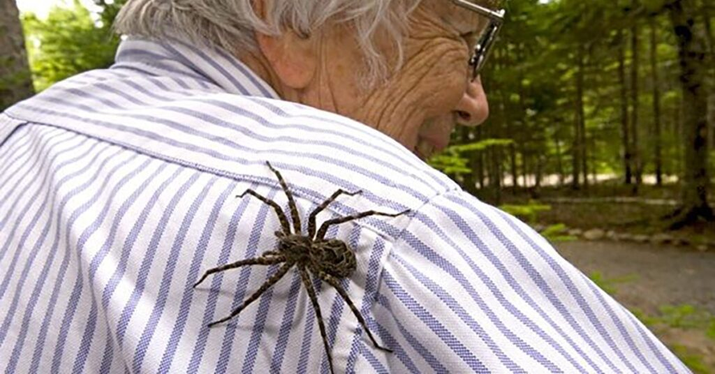 large spiders seen in West Island