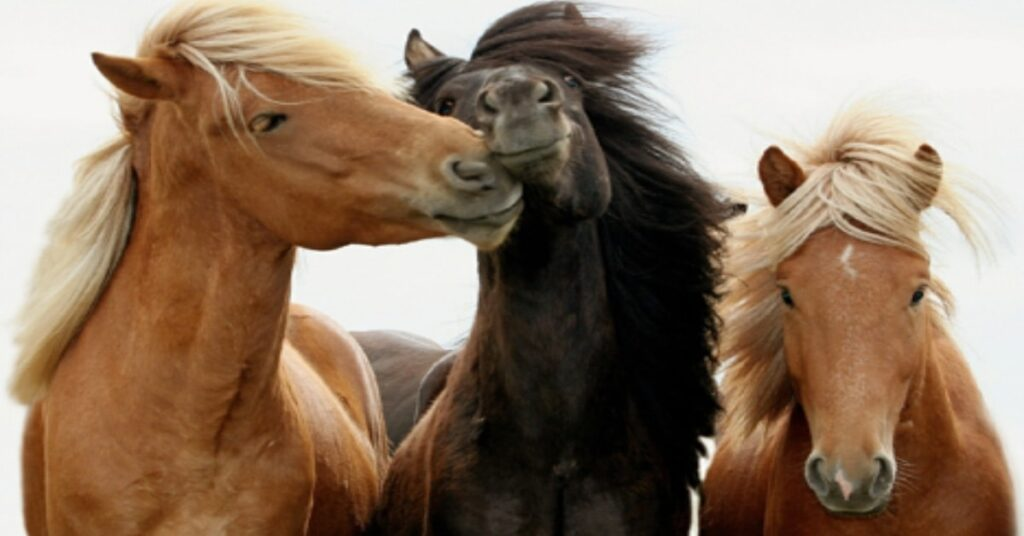 CBD oil and MSM for horses the same thing
