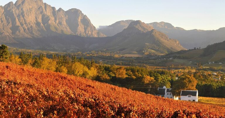 Best South African wines at the SAQ