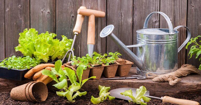 How gardening is like gambling