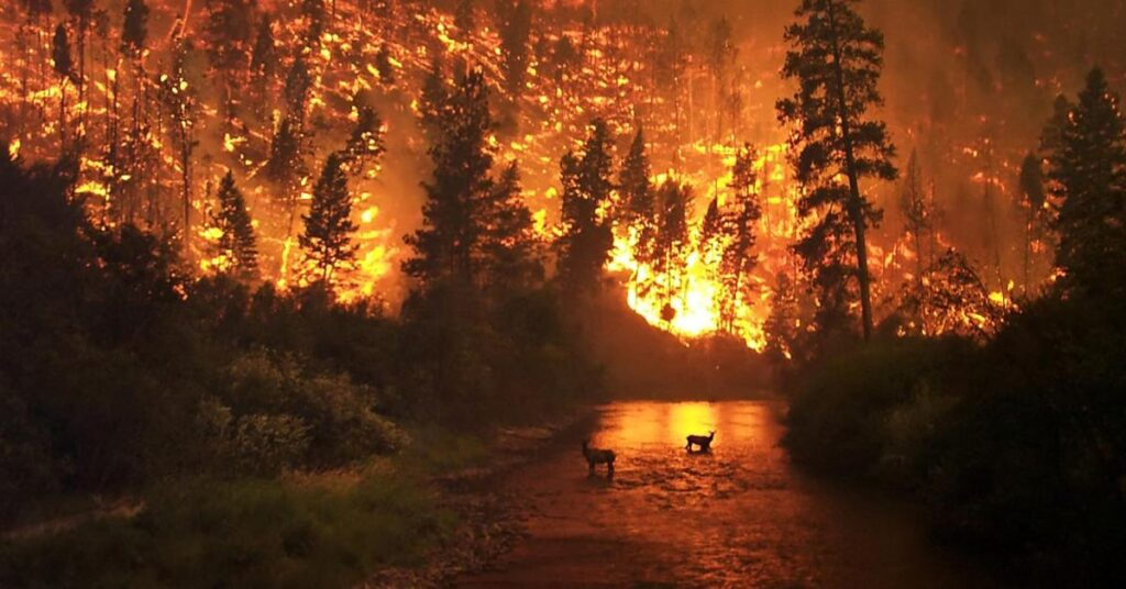 Forest fire APP