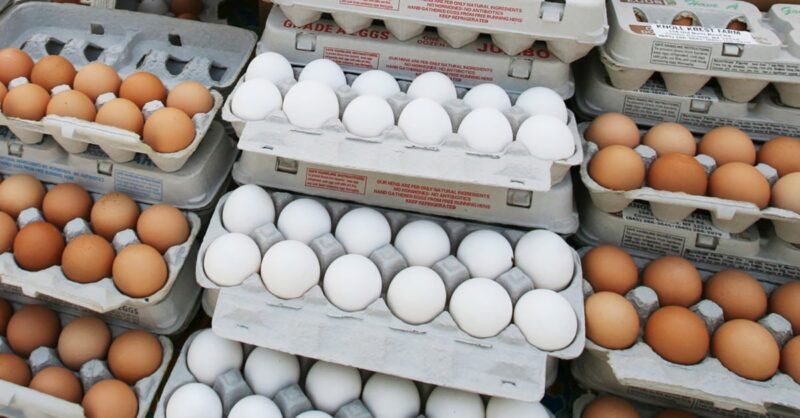 Salmonella infections linked to eggs