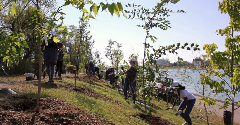 trees-planted-at-Parc-Jean-Drapeau-min